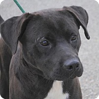Adopt A Pet :: Smokey - Anniston, AL