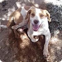 Labrador Retriever Mix Dog for adoption in BONITA, California - Logan