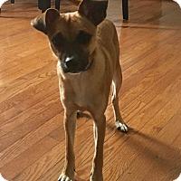 Adopt A Pet :: Newman - Staten Island, NY