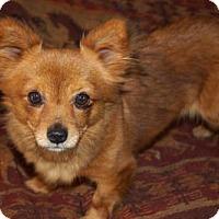 Adopt A Pet :: 'PUMPKIN' - Agoura Hills, CA