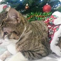 Adopt A Pet :: GINNY - Camarillo, CA