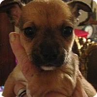 Adopt A Pet :: Dillon - Hartford, CT