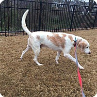 Adopt A Pet :: Charlie - Youngsville, NC