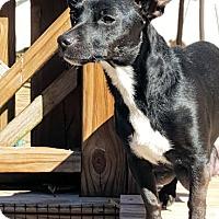 Adopt A Pet :: Peanut - Petersburg, VA