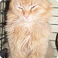 Adopt A Pet :: Bullet - Acme, PA