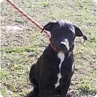 Adopt A Pet :: Max - Adamsville, TN