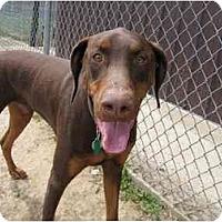 Adopt A Pet :: Bo - New Richmond, OH