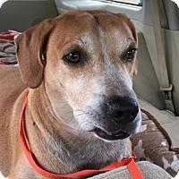 Adopt A Pet :: Trucker AKA Rocky - Sarasota, FL