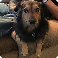 Adopt A Pet :: Dixie - Warsaw, IN