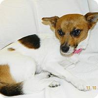 Adopt A Pet :: Pandora - Umatilla, FL