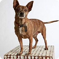 Adopt A Pet :: Petey-No Adoption Fee!! - Scottsdale, AZ