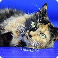 Adopt A Pet :: Oak - Carencro, LA