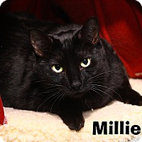 Adopt A Pet :: Millie - Oakland, NJ