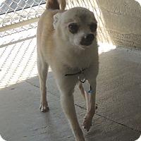Adopt A Pet :: Peanut - House Springs, MO