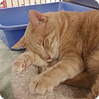 Adopt A Pet :: Sandy (in CT) - Manchester, CT