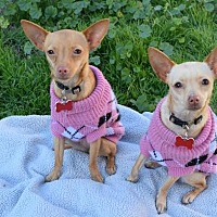 Chihuahua Dog for adoption in El Segundo, California - Anna & Elsa