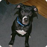 Adopt A Pet :: Eli - Framingham, MA