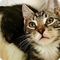 Adopt A Pet :: Napper - Troy, MI