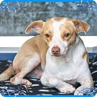 Adopt A Pet :: Reece - Fountain Valley, CA