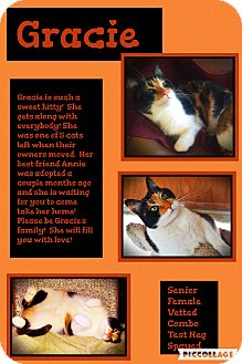 Domestic Shorthair Cat for adoption in CLEVELAND, Ohio - Gracie