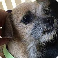 Adopt A Pet :: Daisy - Sunnyvale, CA