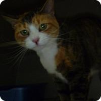 Adopt A Pet :: Fawn - Hamburg, NY