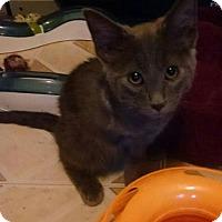 Adopt A Pet :: Towlie - Glendale, AZ