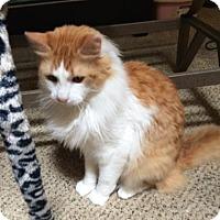 Adopt A Pet :: Boris - Austin, TX
