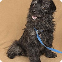 Adopt A Pet :: Petunia - Davis, CA