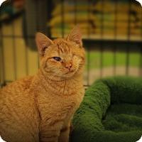Adopt A Pet :: Lyric - Springfield, PA