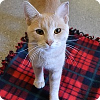 Adopt A Pet :: Bing - Michigan City, IN
