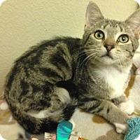 Adopt A Pet :: Barron - Woodland Hills, CA