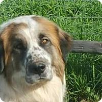 Adopt A Pet :: Freckles - Vacaville, CA