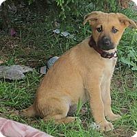 Adopt A Pet :: LUANA - Torrance, CA