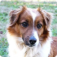 Adopt A Pet :: Tristan - Mocksville, NC