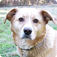 Adopt A Pet :: Jacqueline - Mocksville, NC