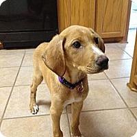 Adopt A Pet :: Tia - Richmond, VA