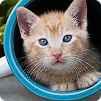 Adopt A Pet :: Bert - Irvine, CA