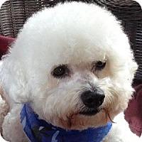 Adopt A Pet :: Tinker - La Costa, CA