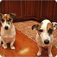 Adopt A Pet :: Lexi - Thomasville, NC