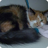 Adopt A Pet :: Xandra - Hamburg, NY