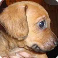 Adopt A Pet :: Anna - San Antonio, TX