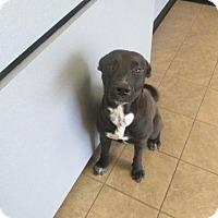 Adopt A Pet :: JAKE - Marion, OH
