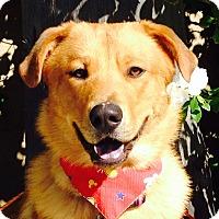 Adopt A Pet :: *URGENT* Charlie - Van Nuys, CA