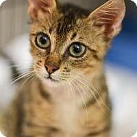 Adopt A Pet :: Simba - New Orleans, LA