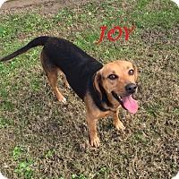 Adopt A Pet :: JOY - Ventnor City, NJ