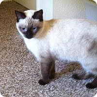 Adopt A Pet :: Asia - Mission Viejo, CA