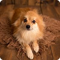Adopt A Pet :: Brusky - conroe, TX