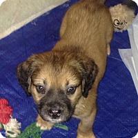 Adopt A Pet :: Nog - Toms River, NJ
