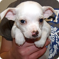 Adopt A Pet :: THREE AMIGOS DOS - Corona, CA